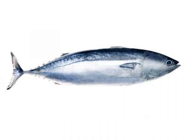 Tuna Uk Delivery