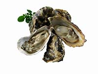 Oysters 1 b