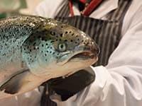 Fishmonger_atlantic _salmon_dreamstime_m_156492841 a